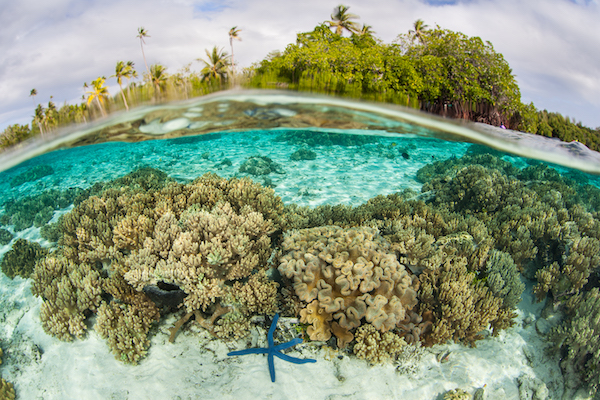 Natural Sciences-coral reef image