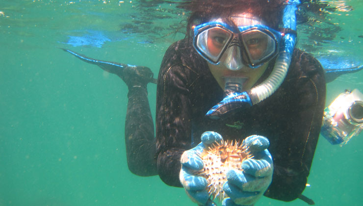 UCEAP student snorkeling in Costa Rica